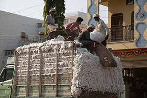 Image of men on a cotton truck in India