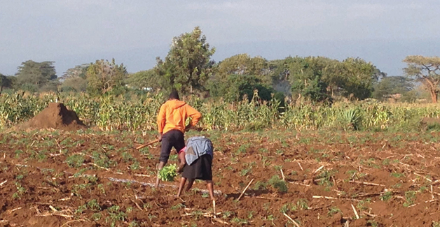 Image of workers in a field