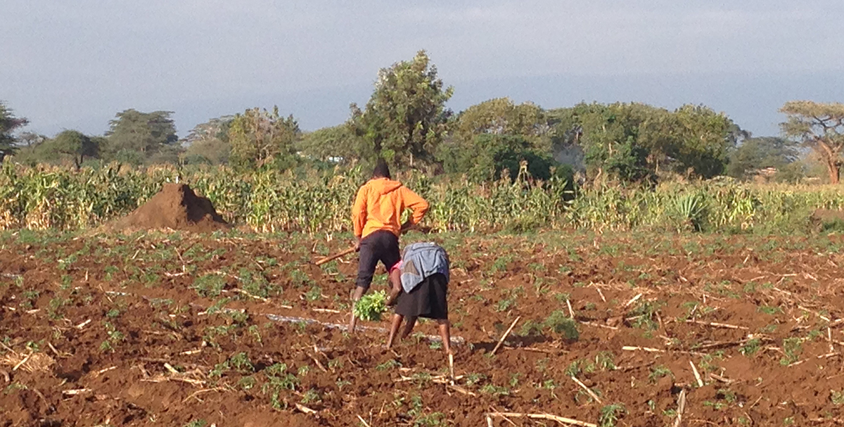 Worker in African field